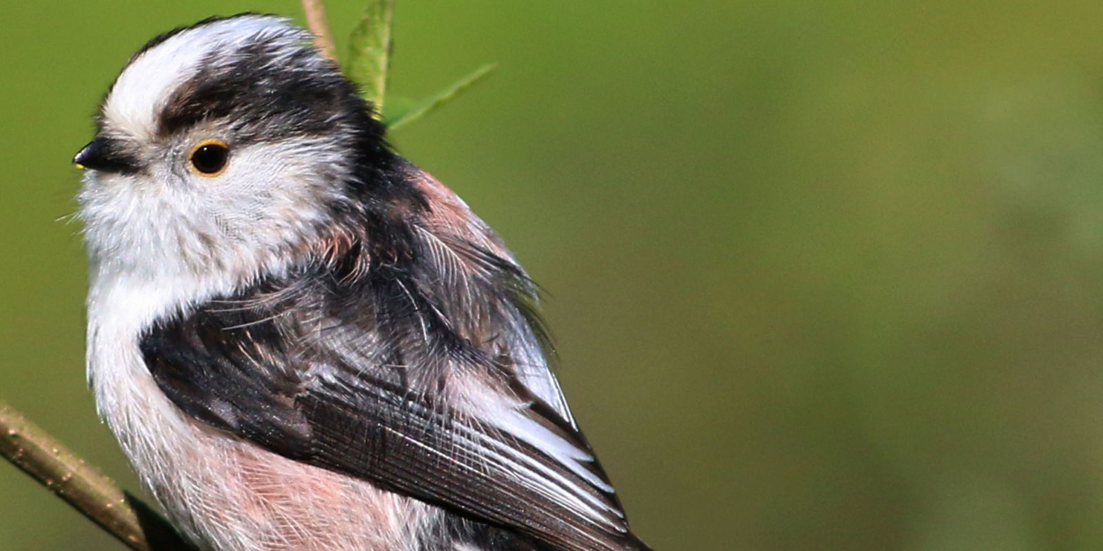 Country Homes And Interiors Recipes These Small Bird Species Are Making A Comeback This Spring