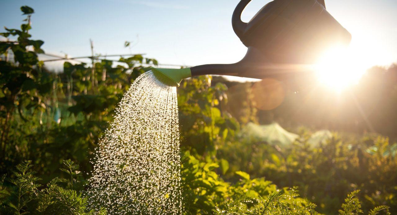 Gallery 1460891124 gardening watering can