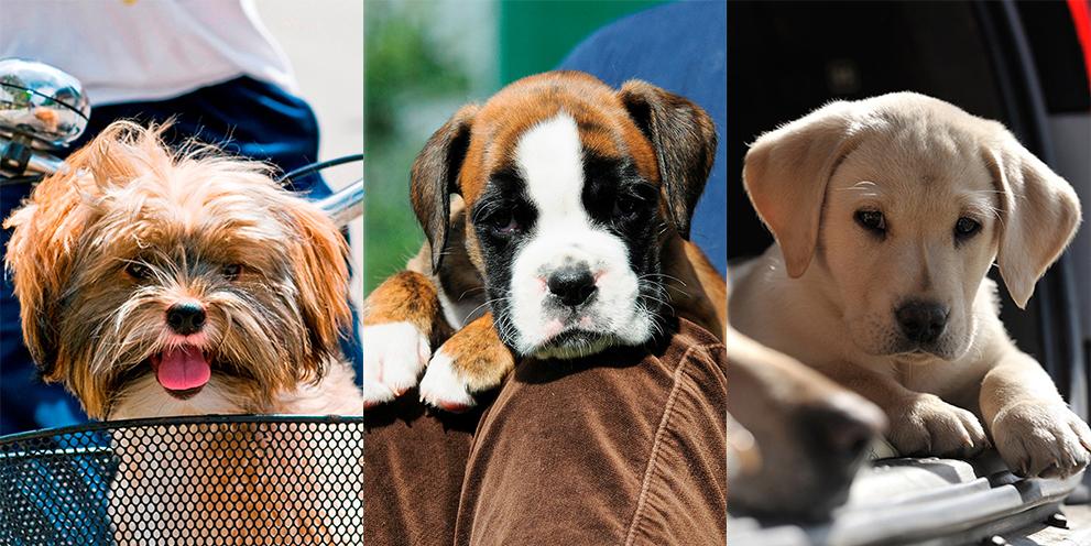 Best Family Friendly Dog Breeds Uk