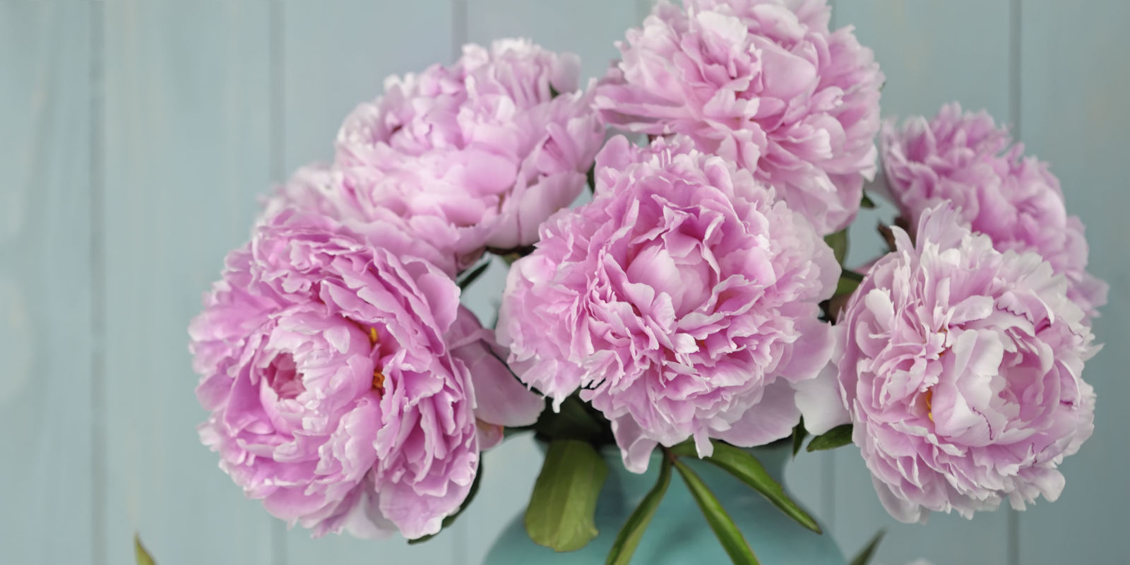 9 lessons in growing the perfect peonies - Growing peonies in the garden ...