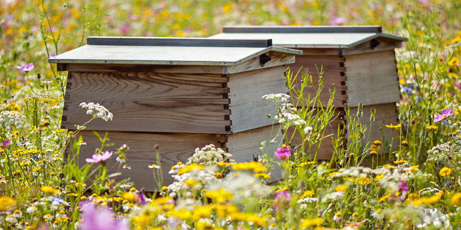 beekeeping for beginners   everything you need to know