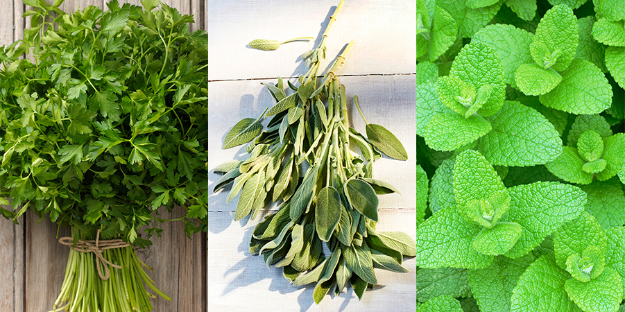 10 of the best herbs to grow in your garden best herb plants to