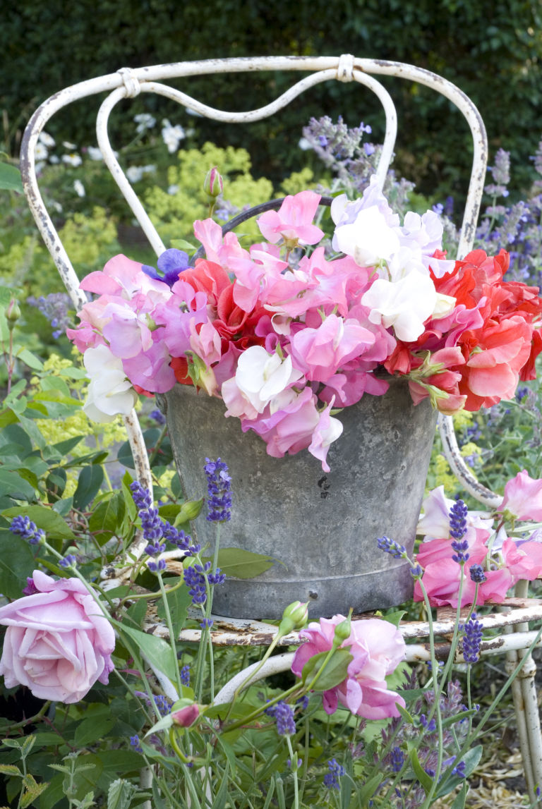 8 of the best garden flowers for cutting and arranging