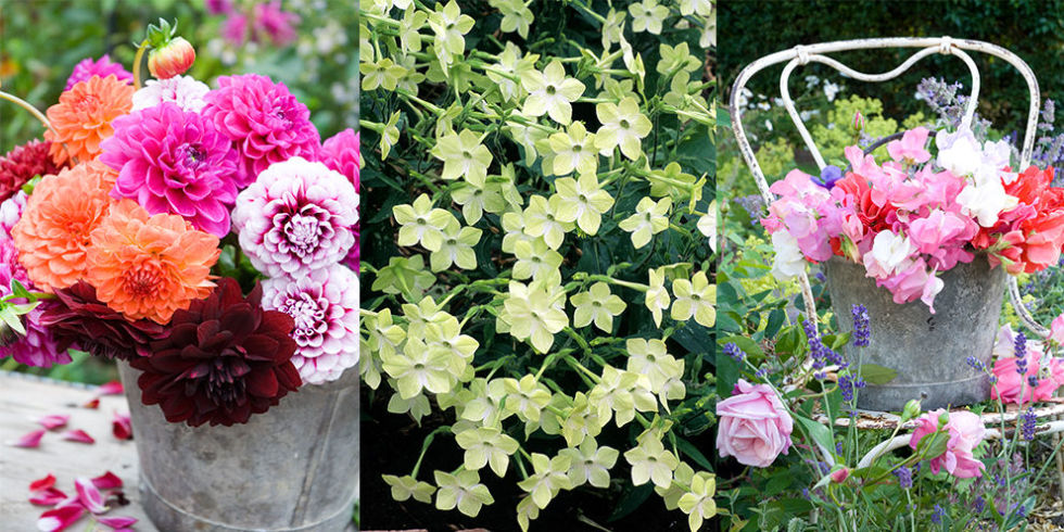 of the best garden flowers for cutting and arranging, Beautiful flower