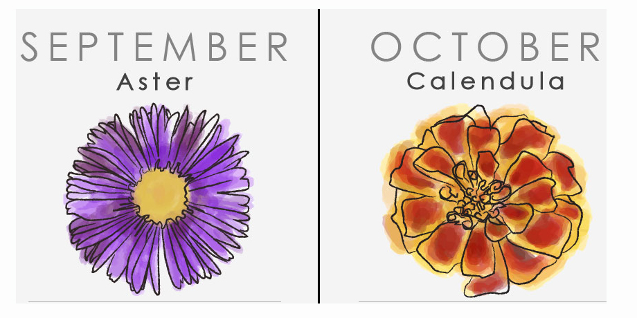 what your birth flower says about your personality, Beautiful flower