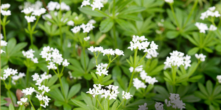 shade plants - Plants That Grow Well In Shade