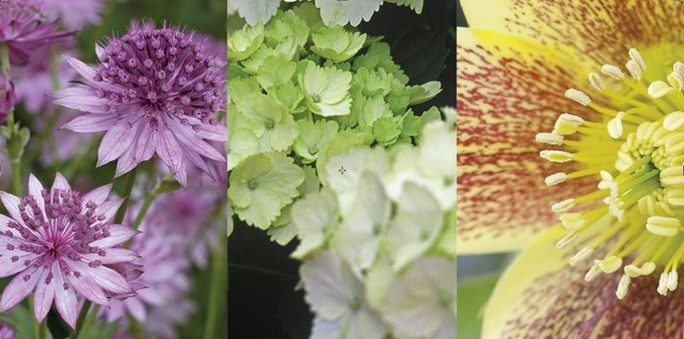 15 of the best shade loving garden plants