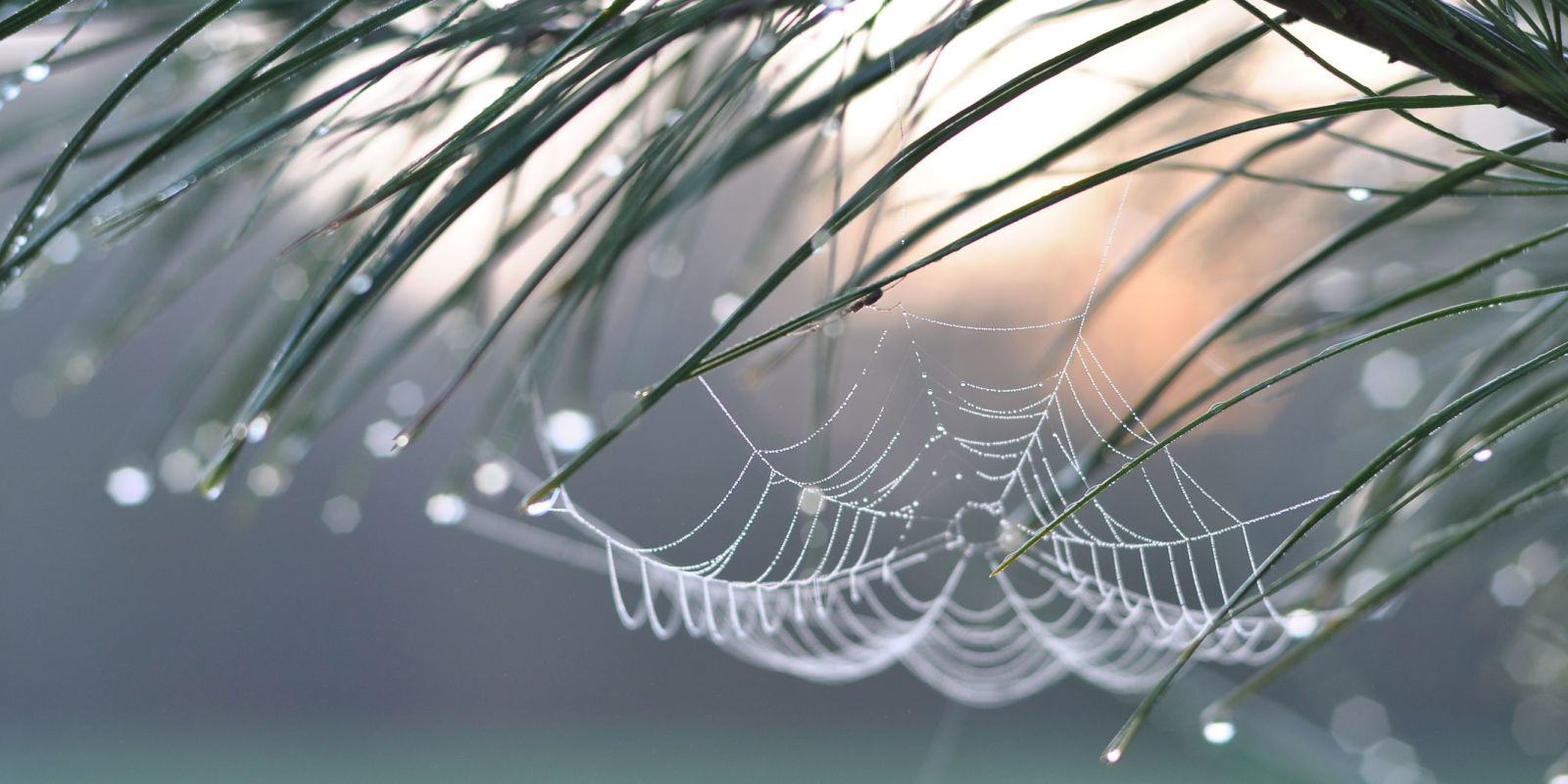 Country Homes And Interiors Recipes How To Cure A Fear Of Spiders
