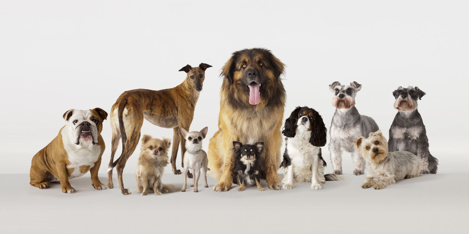 Which breed of dog is the smartest for Types of dogs with photos