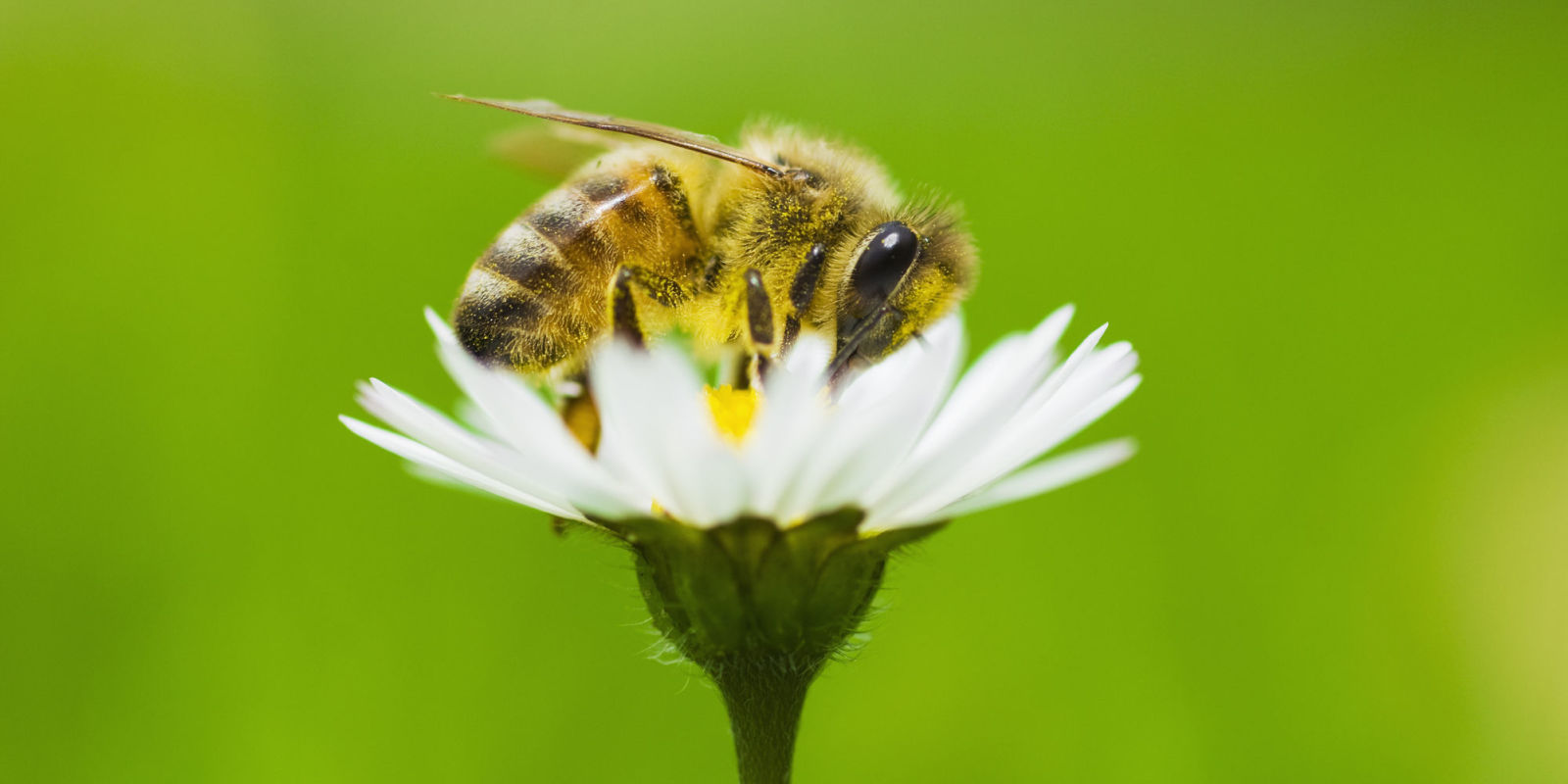 Country Homes And Interiors Recipes B Amp Q Are Helping Save The Bees By Stopping This One Thing
