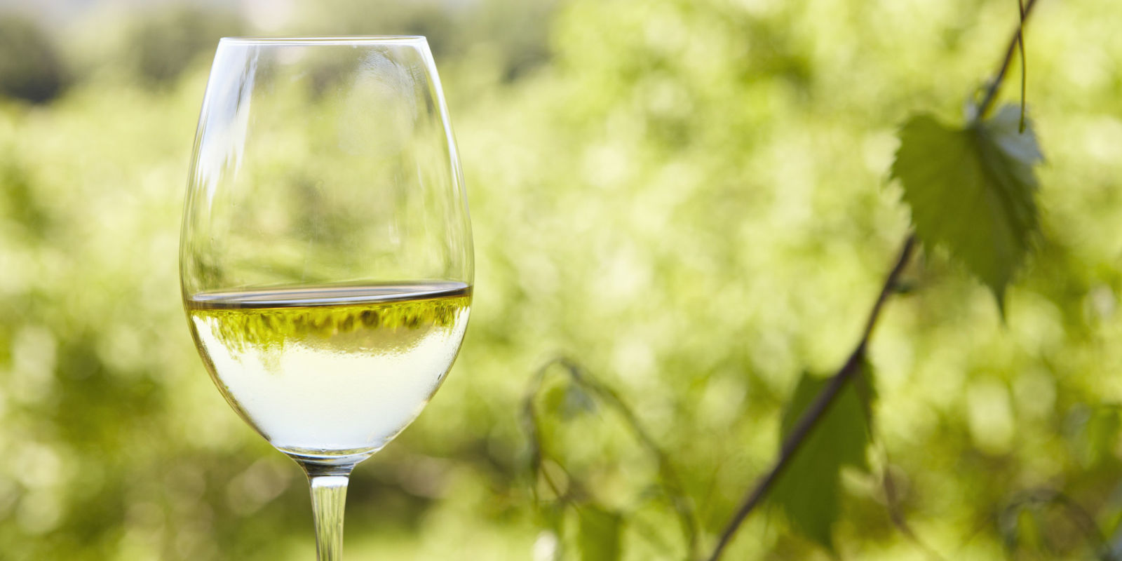 White wine from norfolk named one of the world 39 s best for White wine based cocktails