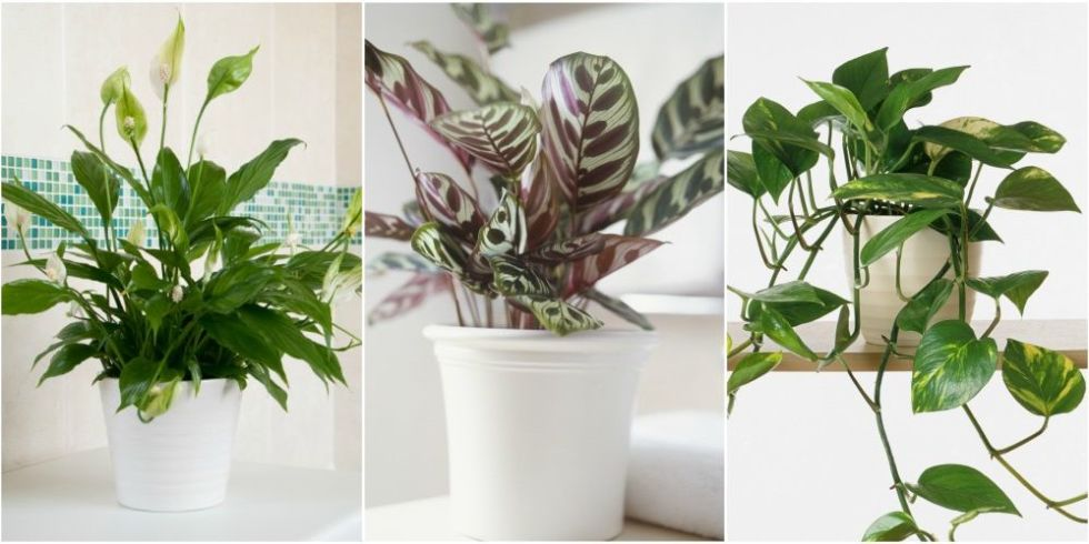 low light houseplants - House Plants