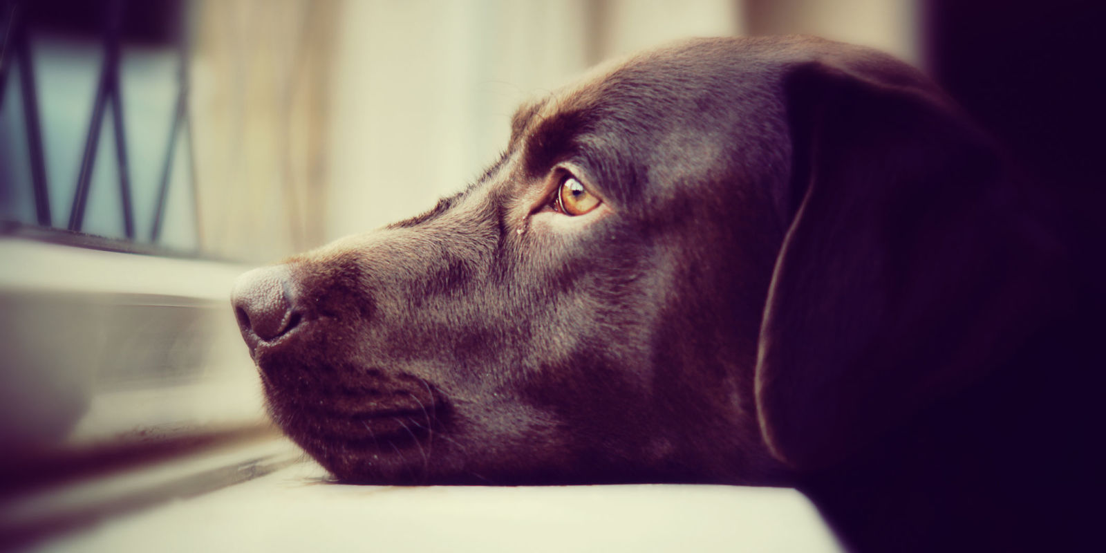How Long Is It Safe To Leave Your Dog Alone For Dog Care Tips