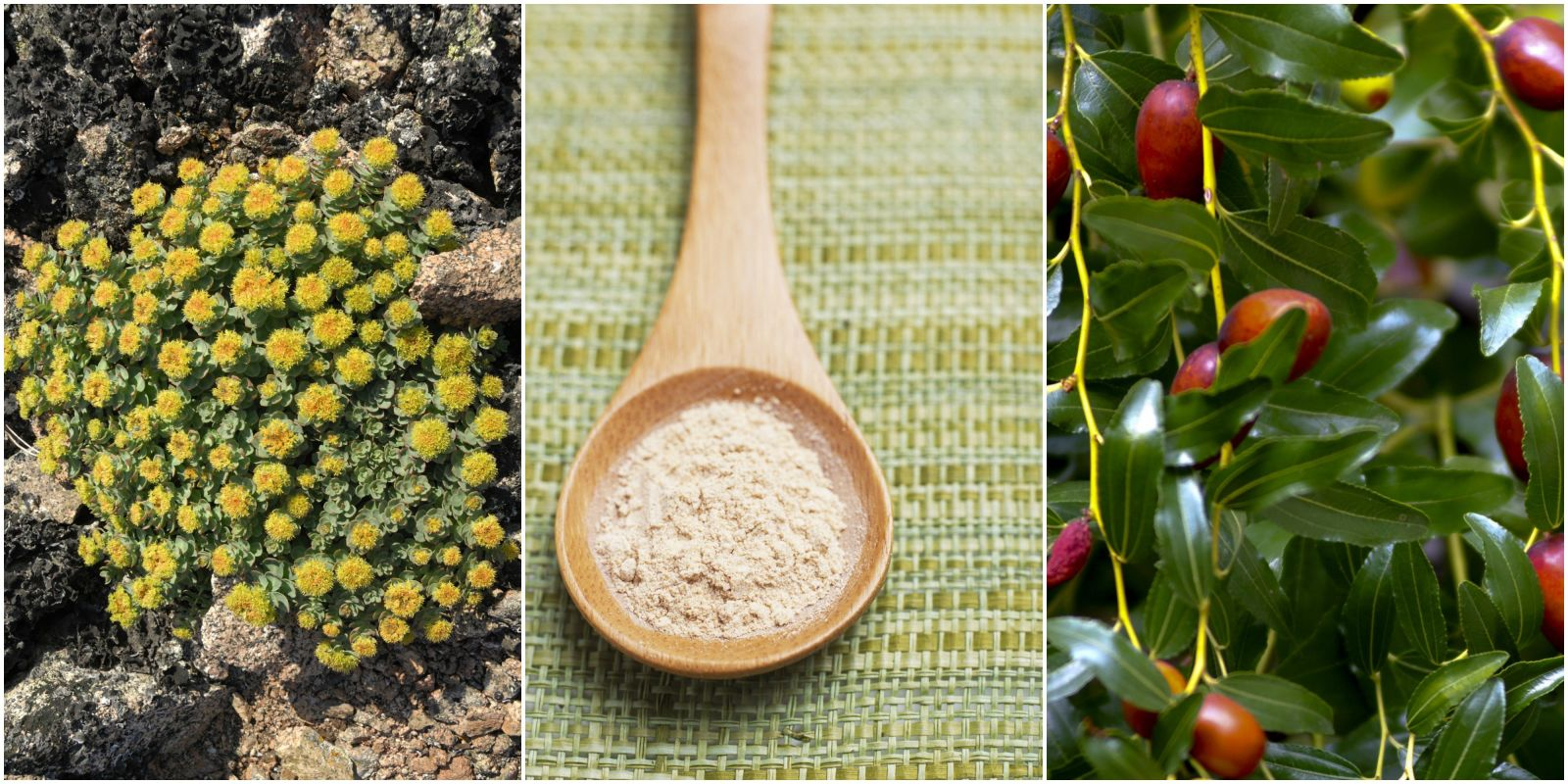 5 best plants to eat for eliminating stress 5 top for Country living magazine uk recipes
