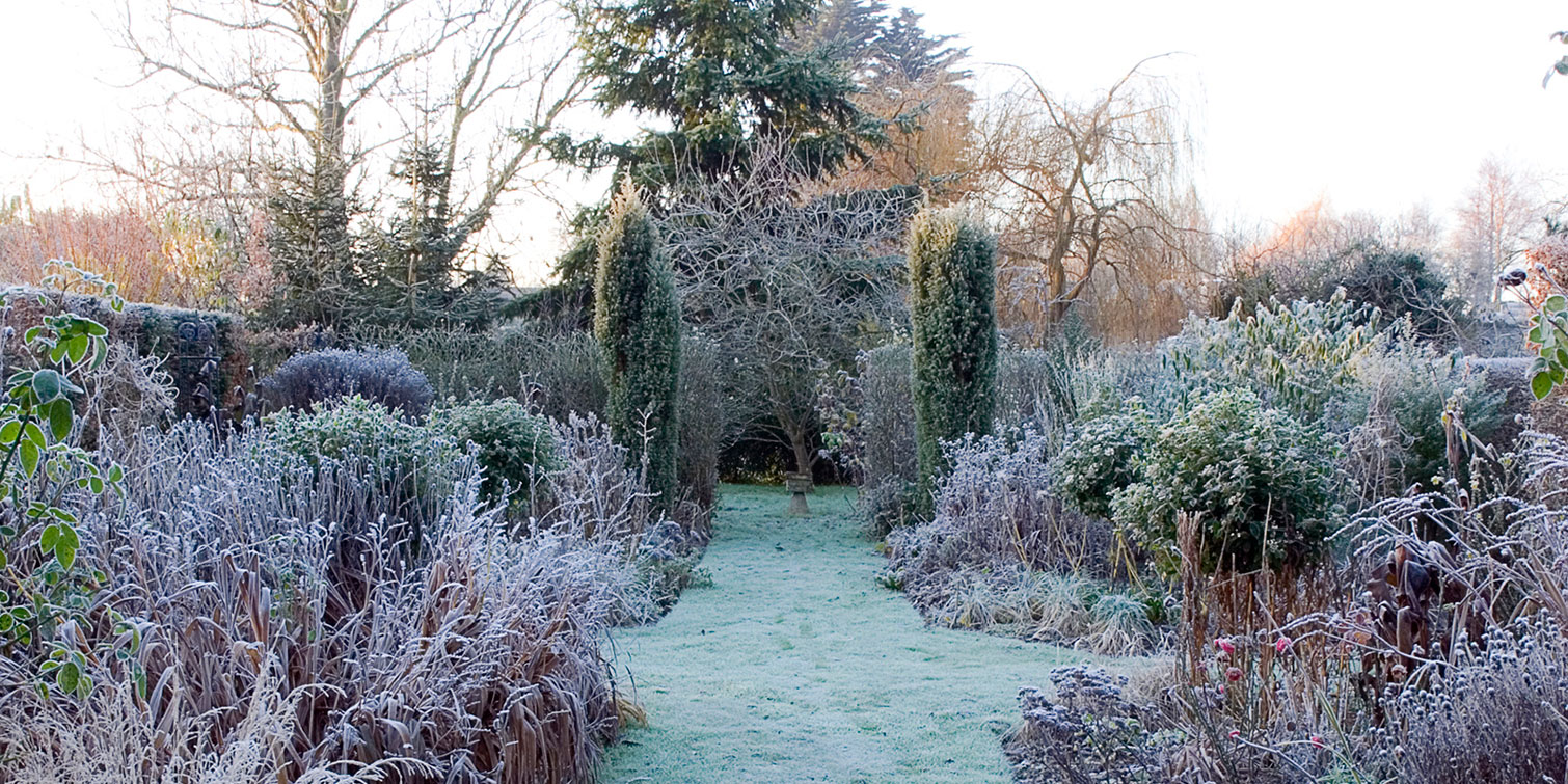 6 Things You Must Do To Take Care Of Your Garden Plants In Winter Winter Gardening Tips