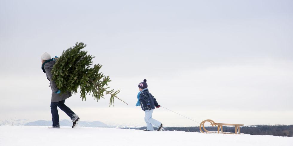 How To Choose A Real Christmas Tree - Real Christmas Tree Care Tips