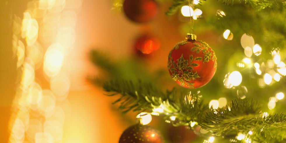 Warning! It's time to get rid of your Christmas tree if you find ...