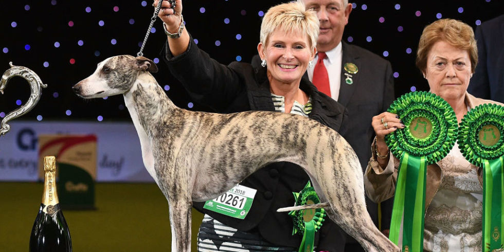 Animal rights protestors storm Crufts arena while whippet Tease is awarded 'Best in Show'